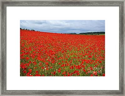 Nottinghamshire Poppy Field Framed Print by David Birchall