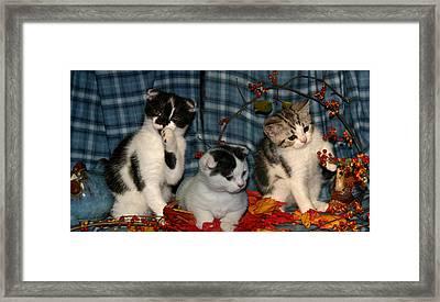 November 2004 Framed Print