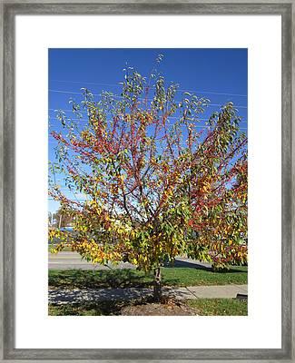 November Great Tree Display Framed Print by Glenda Crigger
