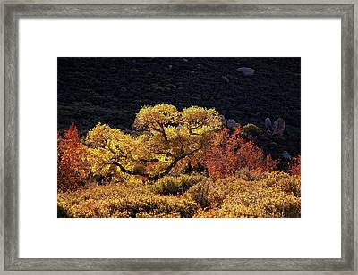 Framed Print featuring the photograph November In Arizona by Ron Chilston