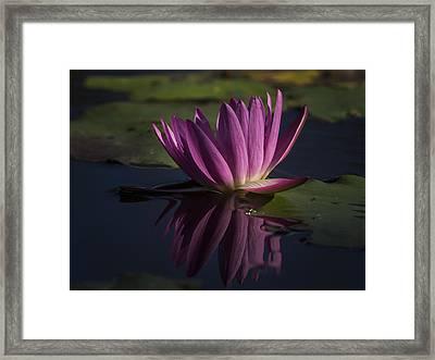 November Lily Framed Print