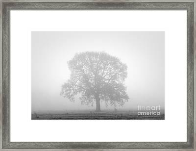 November Oak Framed Print