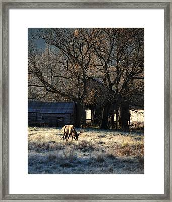 Framed Print featuring the photograph November Sunrise by Michael Dougherty