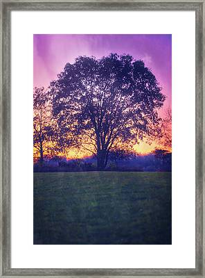 November Sunset And Lone Tree At Retzer Nature Center Framed Print by Jennifer Rondinelli Reilly - Fine Art Photography
