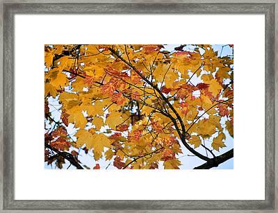 November Twilight Framed Print by JAMART Photography