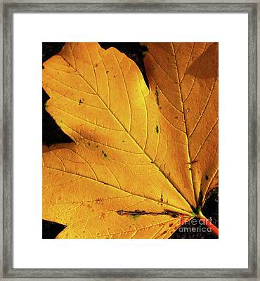 Novemberleaf Framed Print by Maria Scarfone
