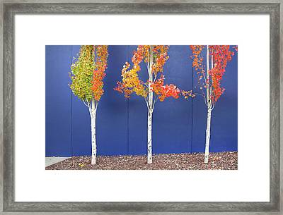 Now Showing Framed Print by Theresa Tahara