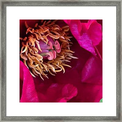 Now Tell Me...have You Ever Seen Framed Print
