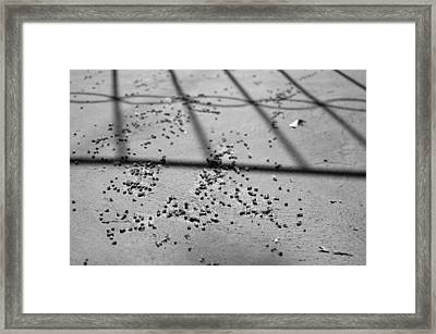 Nuances Of Nature - Dna 2009 Limited Edition 1 Of 1 Framed Print