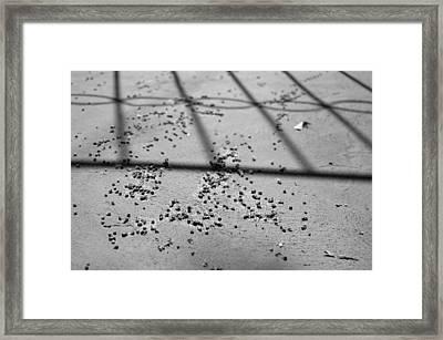 Nuances Of Nature - Dna 2009 1 Of 1 Framed Print