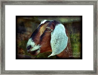 Nubian Goat Framed Print by Elaine Manley