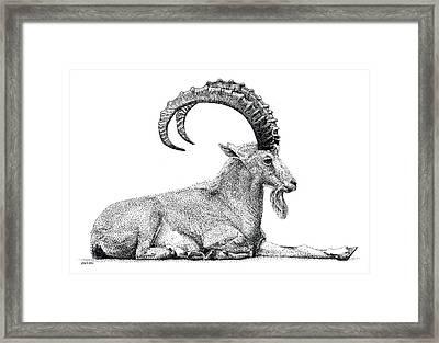 Nubian Ibex Framed Print
