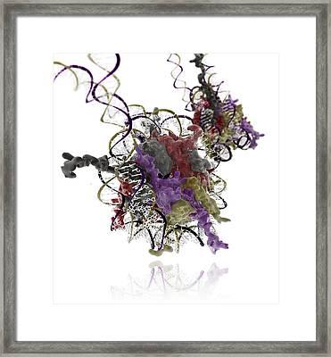 Nucleosome Molecule Framed Print