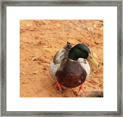 Framed Print featuring the photograph Number 17 by Kim Henderson