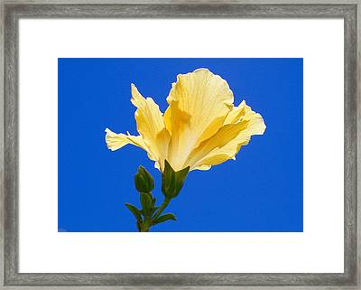 Numinous Yellow Framed Print