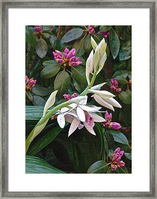 Nun Orchid Framed Print