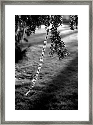 Nuneaton 4 Framed Print by Jez C Self