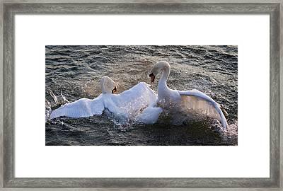 Nuptial Dance Framed Print