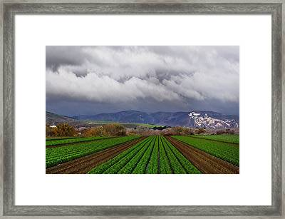 Nurishment Anew Framed Print by Lynn Andrews