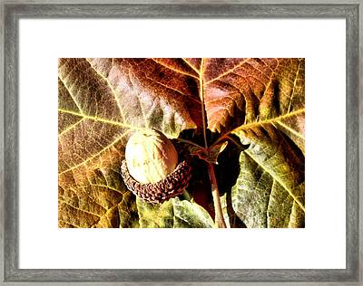 Nut On A Leaf Framed Print