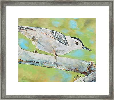 Nuthatch #1 Framed Print by Amber Foote
