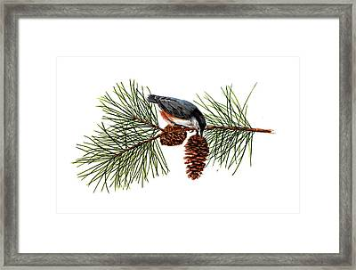Nuthatch 1 Framed Print