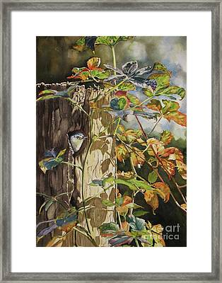 Nuthatch And Creeper Framed Print by Greg and Linda Halom
