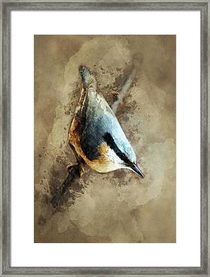 Nuthatch On The Branch Framed Print