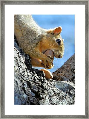 Framed Print featuring the photograph Nutjob by Debbie Karnes