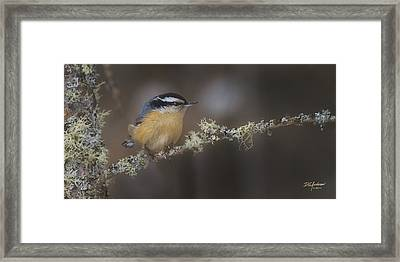 Nuts About Nuthatches Framed Print