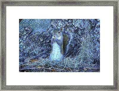 Framed Print featuring the photograph Nuts Anyone by Deborah Benoit