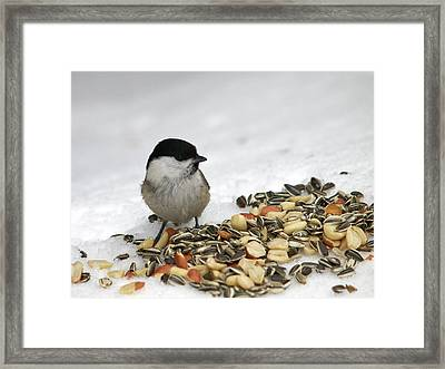 Nuts Said The Willow Framed Print