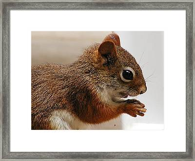 Framed Print featuring the photograph Nutty Guy by Martha Ayotte