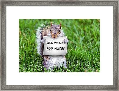 Nutty Squirrel Framed Print by Brian Wallace