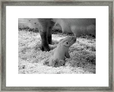 Nuture Framed Print