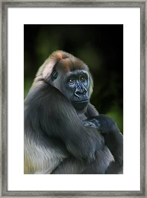 Nyango Framed Print by Julie L Hoddinott