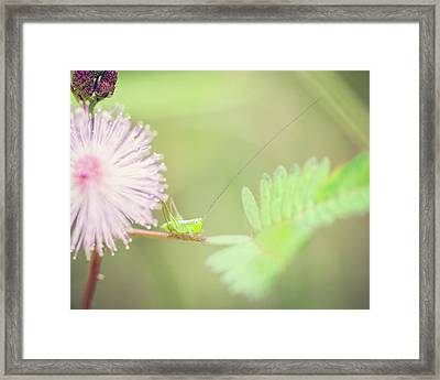 Nymph Framed Print by Heather Applegate