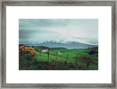 Nz Dreaming Framed Print