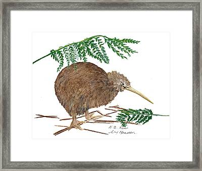 Nz Native Kiwi Bird Framed Print