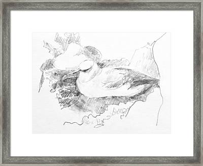 New Zealand White-capped Mollymawk Framed Print
