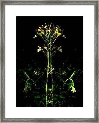 Oa-2210 Framed Print