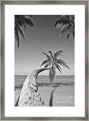 Oahu Palms Framed Print by Tomas del Amo - Printscapes
