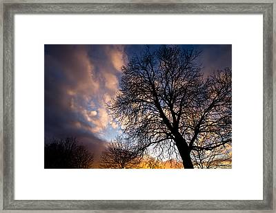Oak Against The Sky Framed Print by Justin Albrecht