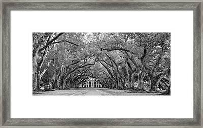 Oak Alley 4 Bw Framed Print