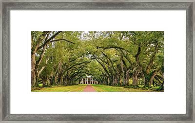 Oak Alley 4 Framed Print by Steve Harrington