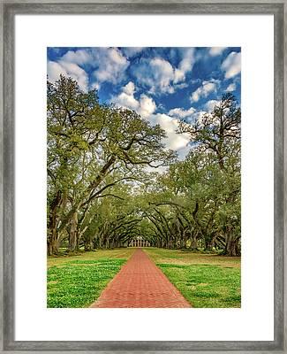 Oak Alley 7 Framed Print by Steve Harrington