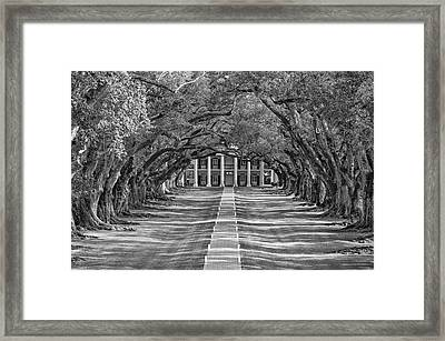 Oak Alley Evening Bw Framed Print by Steve Harrington