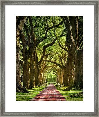 Oak Alley Framed Print by Mikes Nature