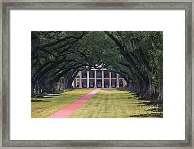 Oak Alley Framed Print by Perry Webster