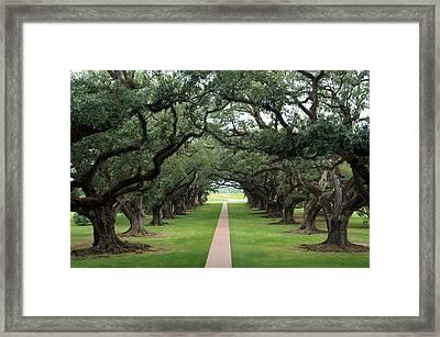 Oak Alley Framed Print by Peter Verdnik